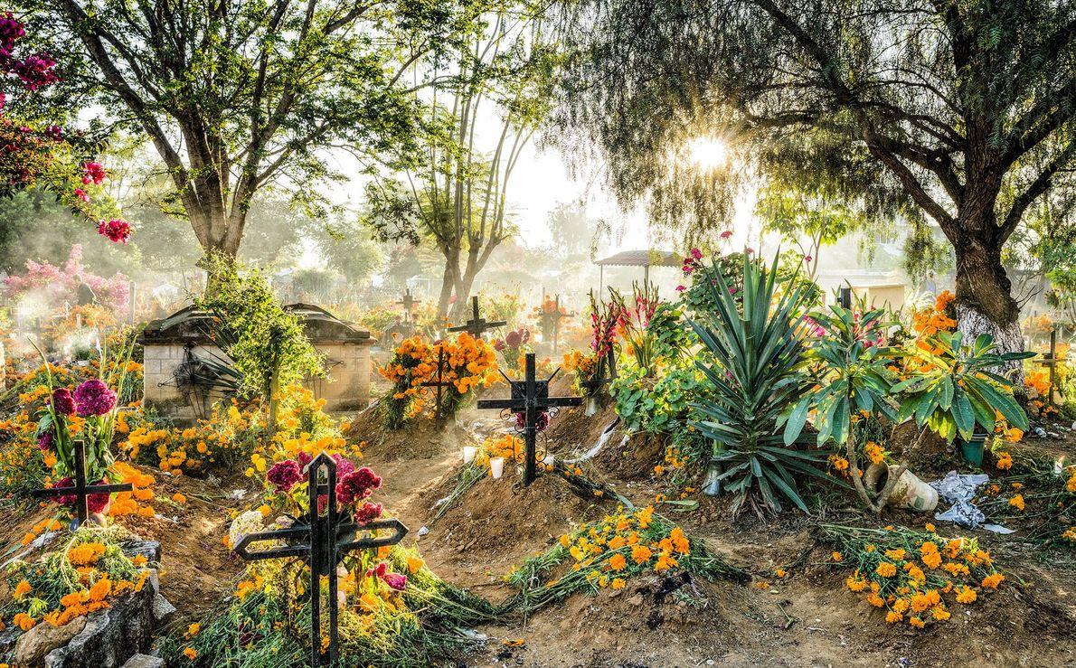 Des œillets d'Inde, Cempasúchil en espagnol, recouvrent le cimetière d'Oaxaca, au Mexique. Contrairement à ce que ...