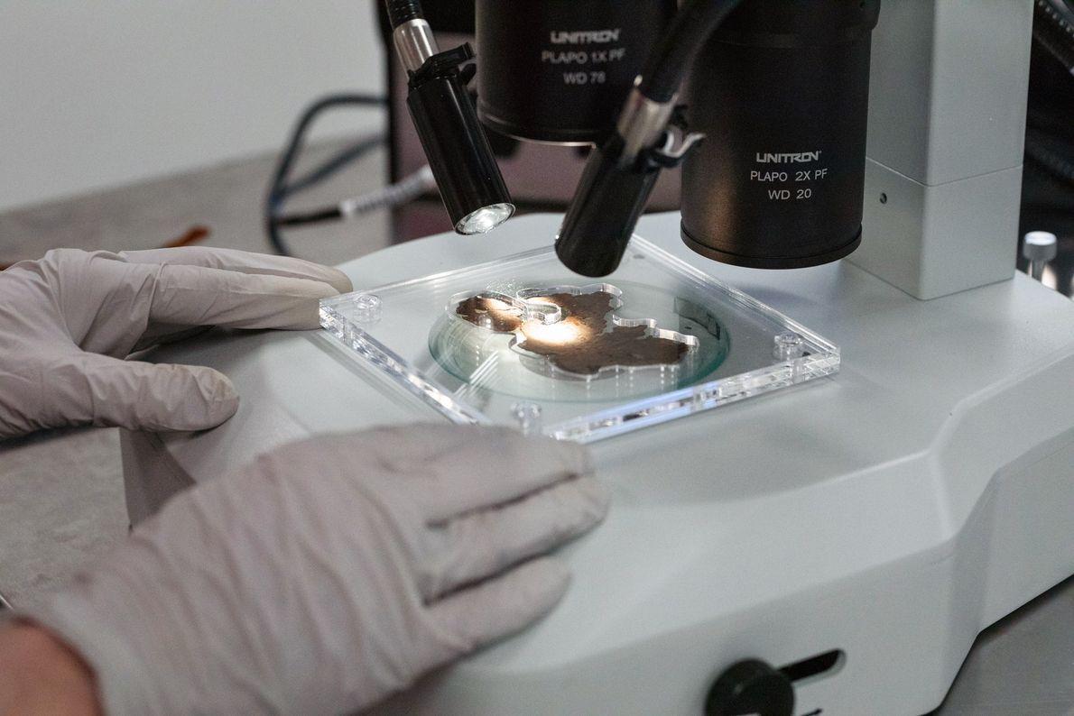 Les chercheurs ont examiné avec attention les surfaces des seize fragments à fort grossissement, et ce, ...