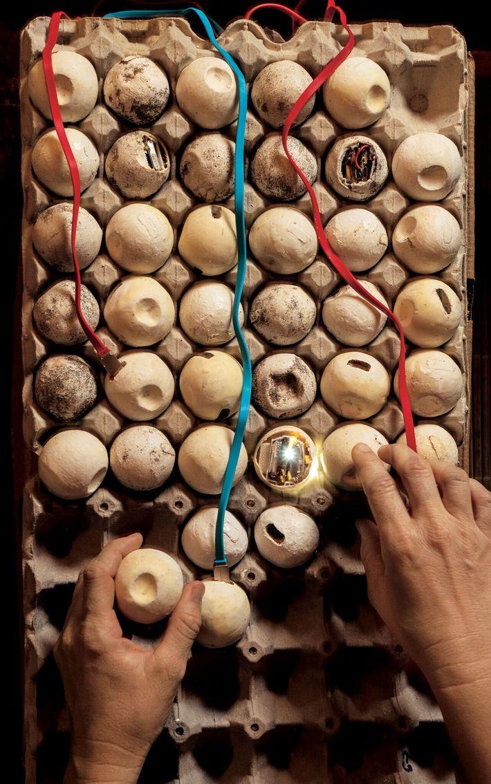 Pour lutter contre les braconniers au Costa Rica, la chercheuse Helen Pheasey installe des œufs leurres ...