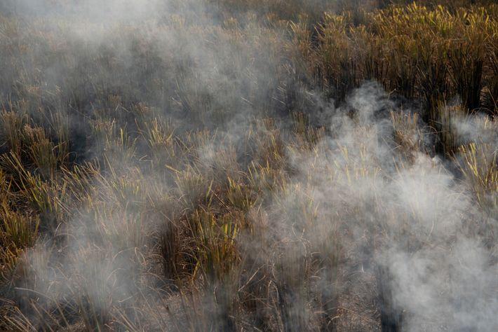Un champ est brûlé pour se débarrasser du chaume des cultures de riz là où la ...