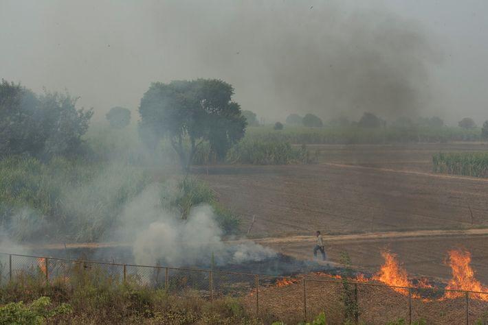 Les organes publics de contrôle de la pollution du nord de l'Inde surveillent le brûlage de ...