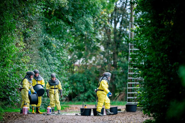 Les visons de 207 des 1200 fermes à fourrure au Danemark ont été infectés par le ...
