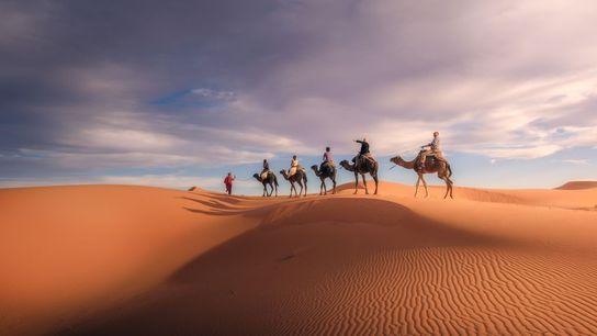 Une caravane de chameaux progresse au milieu des dunes vallonnées du Sahara, au Maroc.