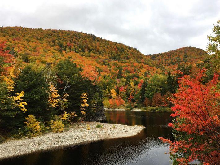 Les arbres longeant la piste Cabot du cap Breton affichent leurs plus belles couleurs d'automne.