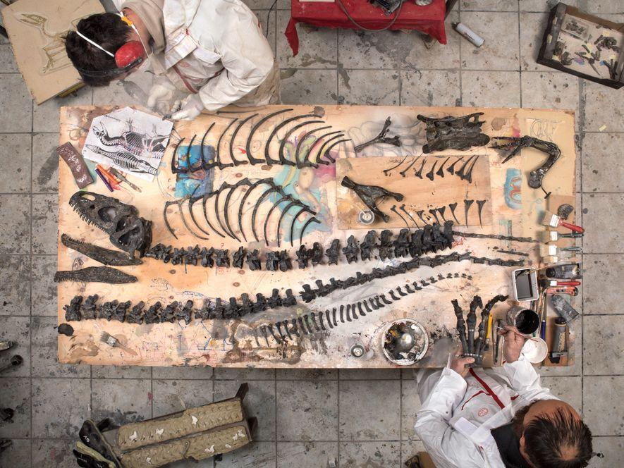 Cet Allosaurus, exhumé dans le Wyoming, a été reconstitué chez Zoic, une entreprise italienne de restauration ...