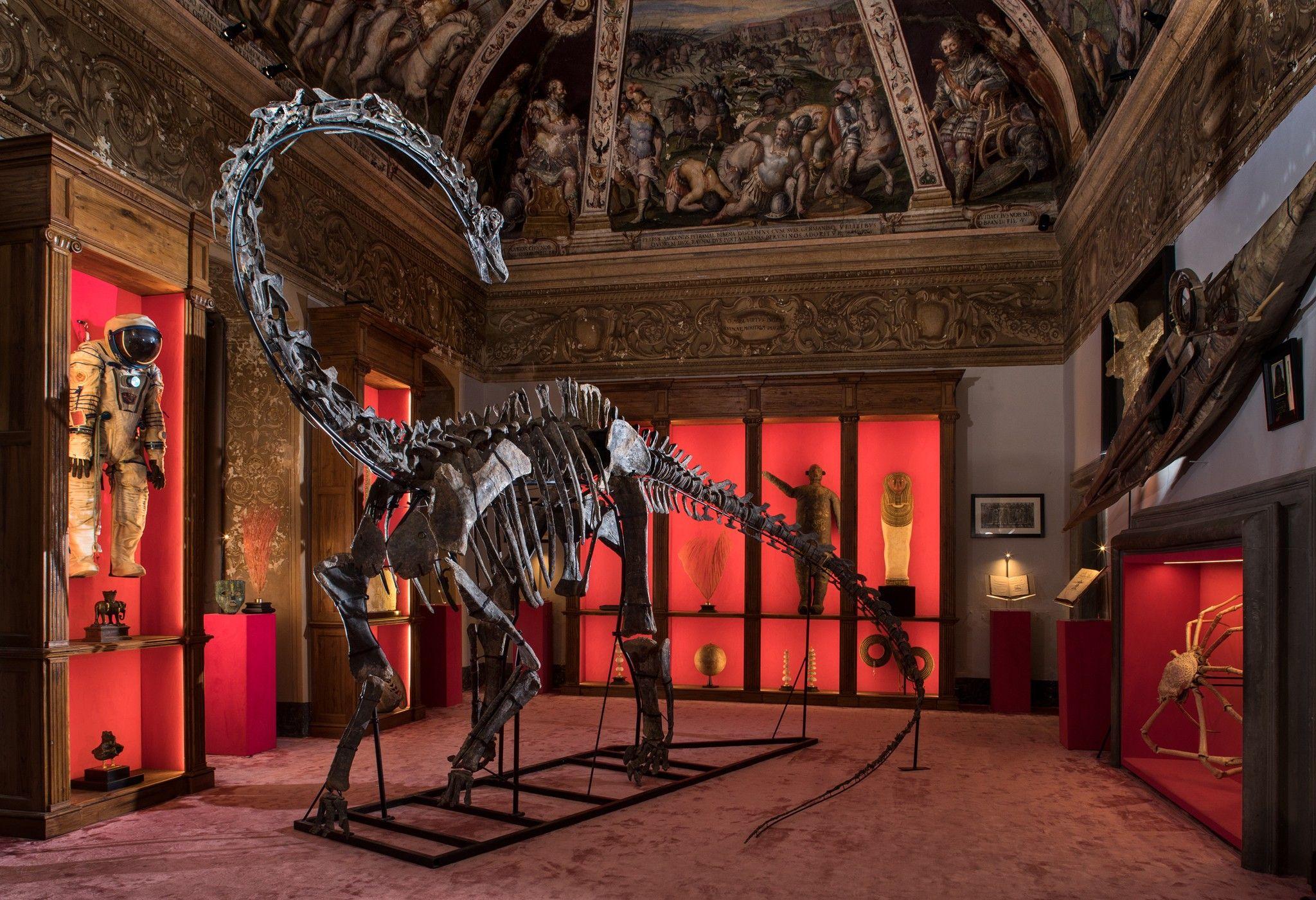 Dans l'intimité des collectionneurs de fossiles | National Geographic