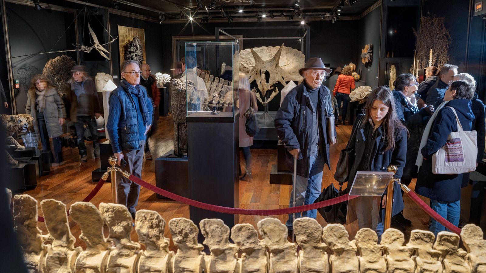 Un crâne de Triceratops (au centre, à l'arrière-plan) et d'autres fossiles attirent la foule dans la ...