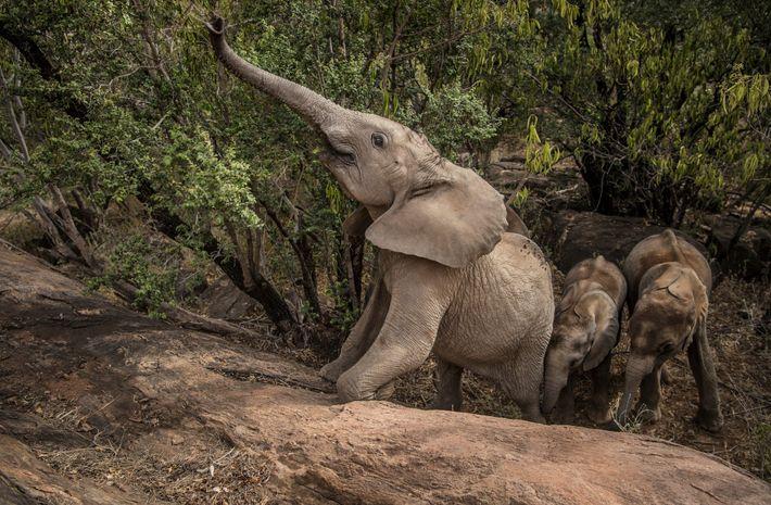 dispatches-vitale-elephants06