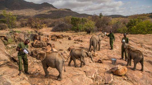 Ils craignaient les éléphants, aujourd'hui ils les protègent