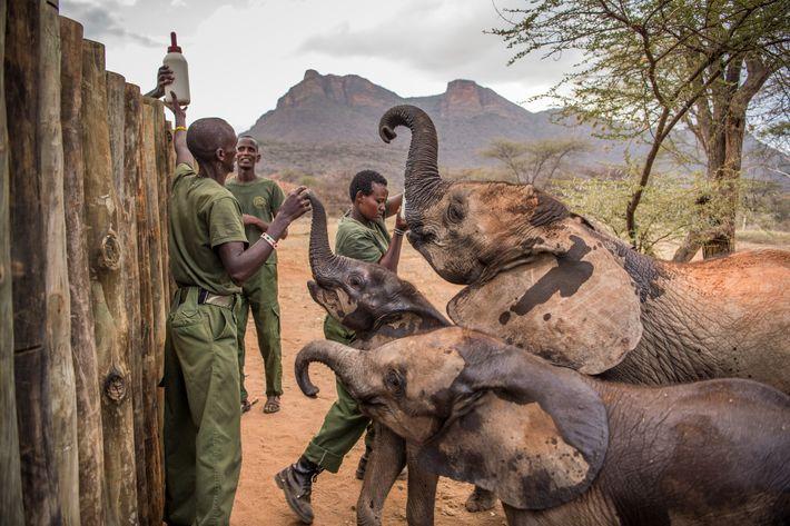 dispatches-vitale-elephants14