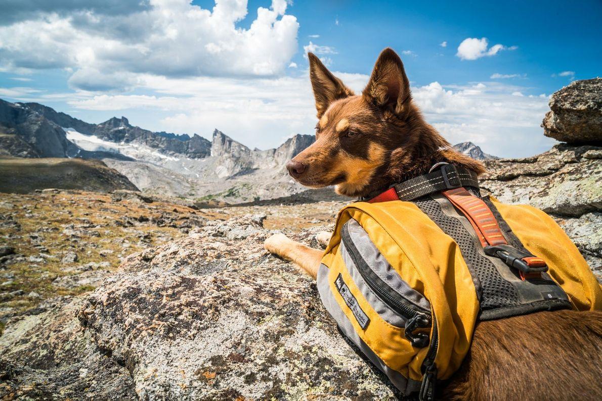 « Comme tant d'autres activités extérieures, la randonnée est l'une des nombreuses occupations de ma chienne ...