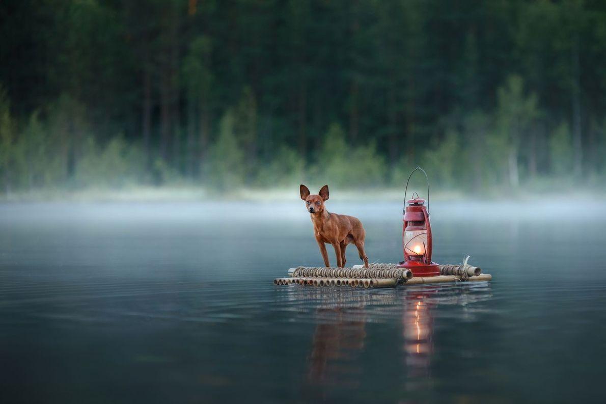 « Un petit chien flottant sur le lac. » - Anna Averianova
