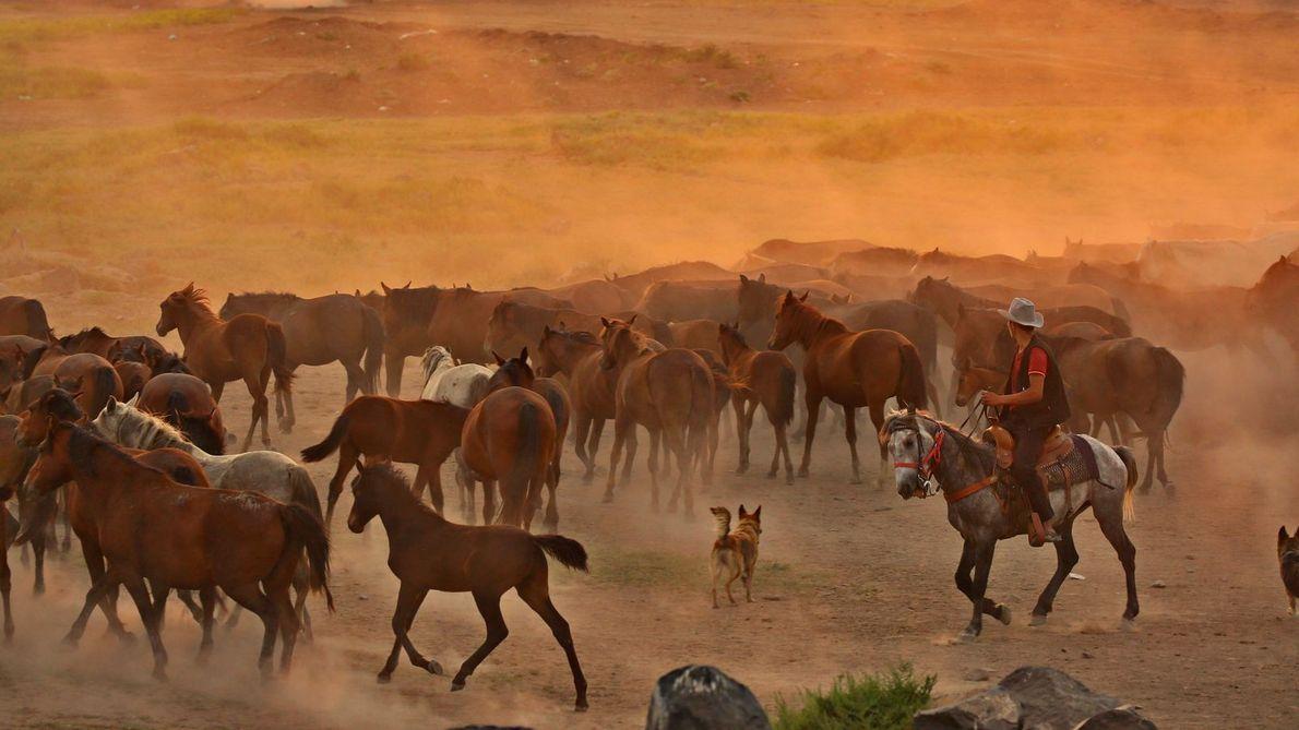 Un chien au milieu de chevaux et de nuages de poussière.