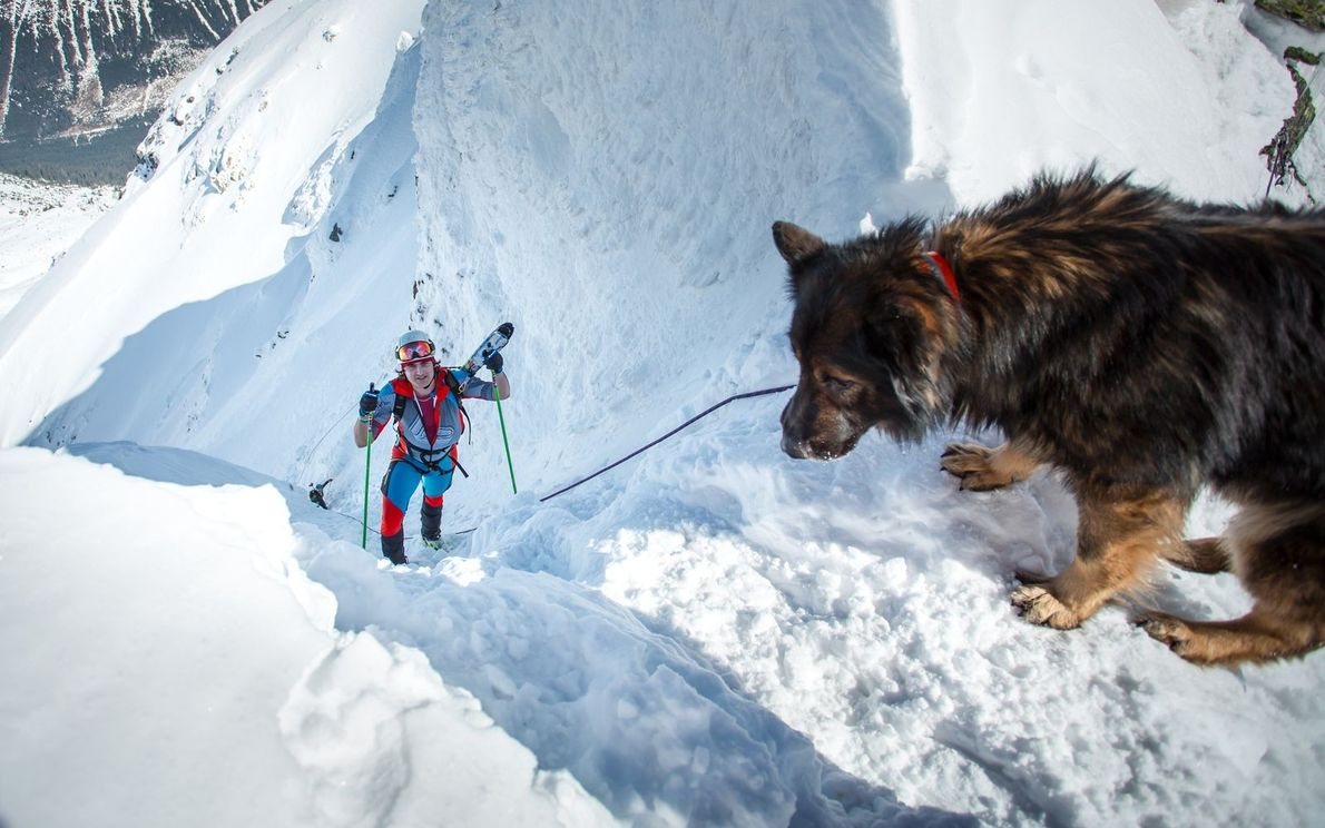 « Un chien secouriste attend l'athlète lors de la course de Bokami Zapadnych Tatier en Slovaquie, ...