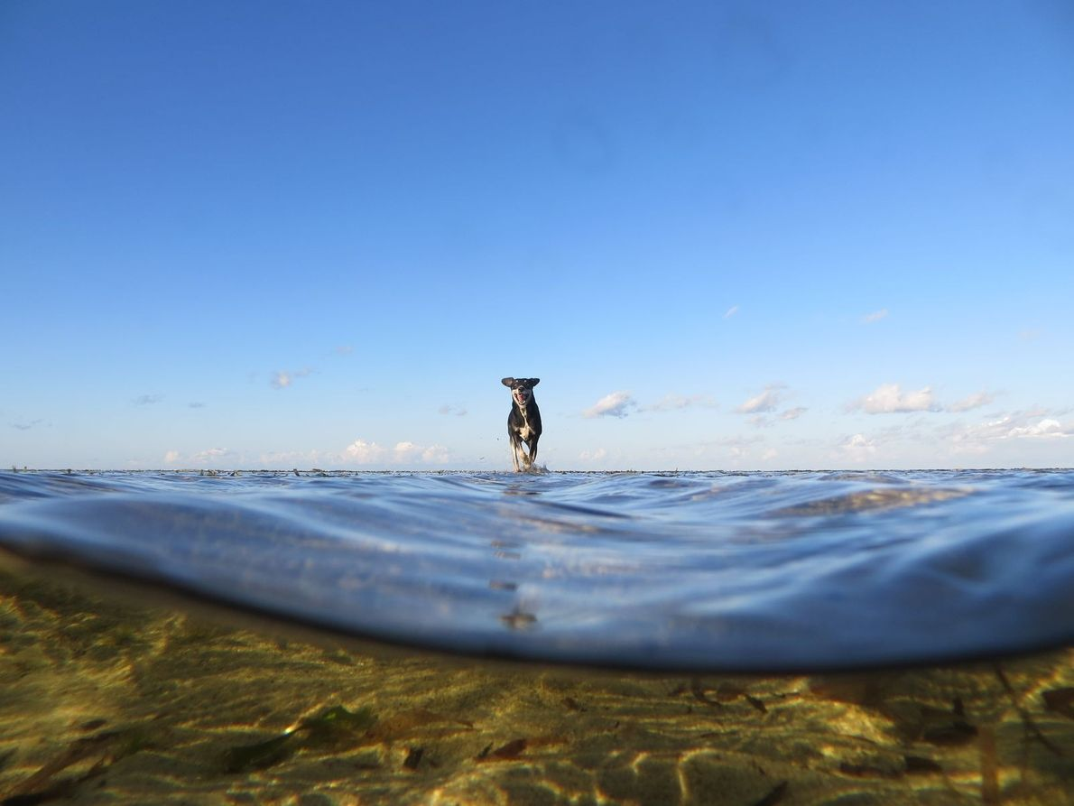 « Lors d'une promenade en bord de mer, près de notre maison, mon copain a pris ...