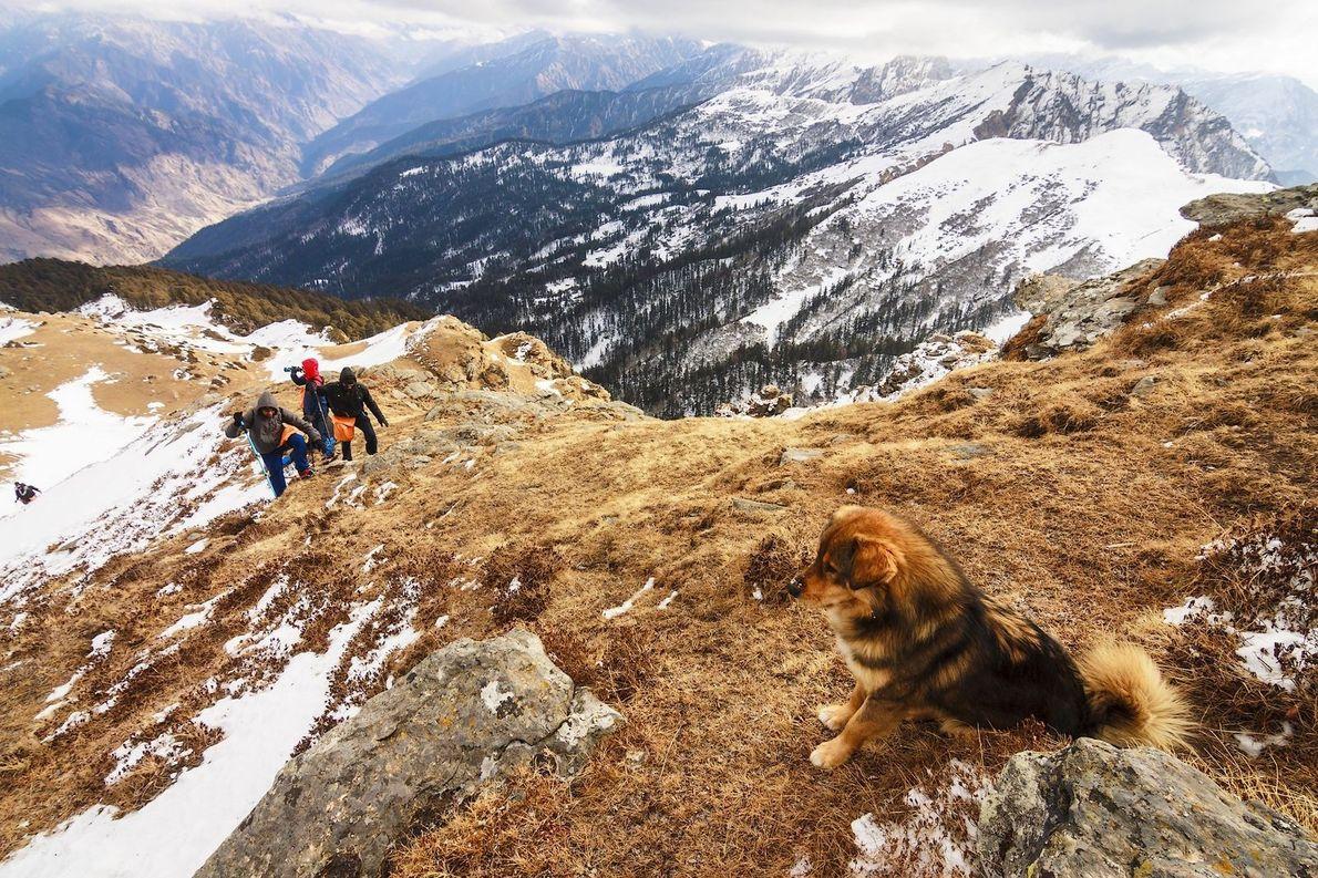 « Curieusement, à chacune de mes randonnées à travers l'Himalaya, un chien nous tient presque toujours ...