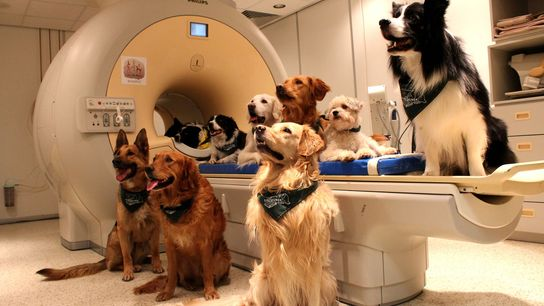 Des mois ont été nécessaires pour apprendre aux chiens de l'étude à rester complètement immobiles.