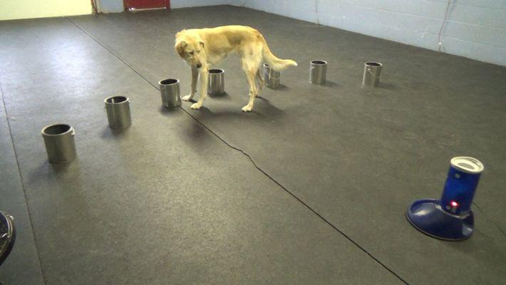 Les chiens sont capables de détecter les signes d'une crise d'épilepsie grâce à leur odorat