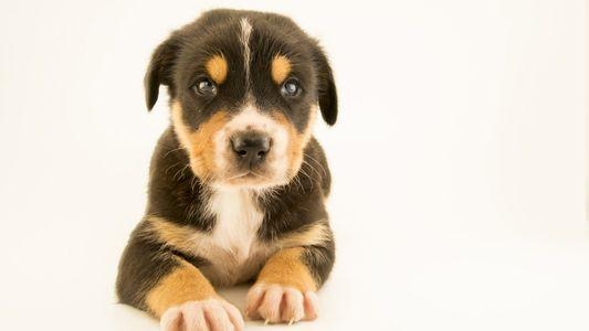 Comment les chiens de sauvetage retrouvent-ils les survivants d'une catastrophe ?