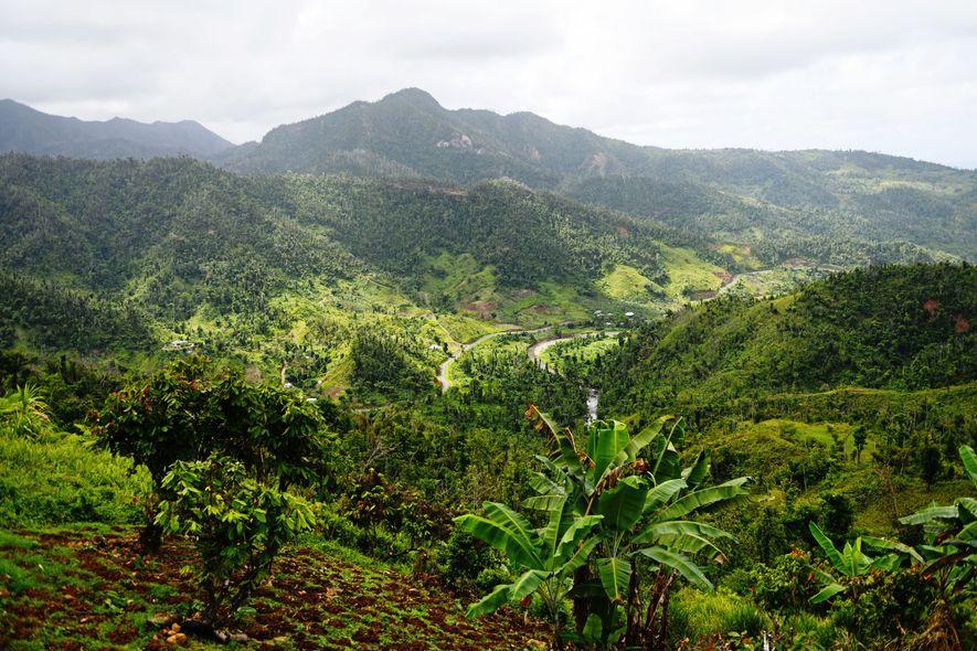 Nord-est de l'île, territoire autonome des Kalinagos. Une succession de vallées encaissées où vivent encore 3 ...