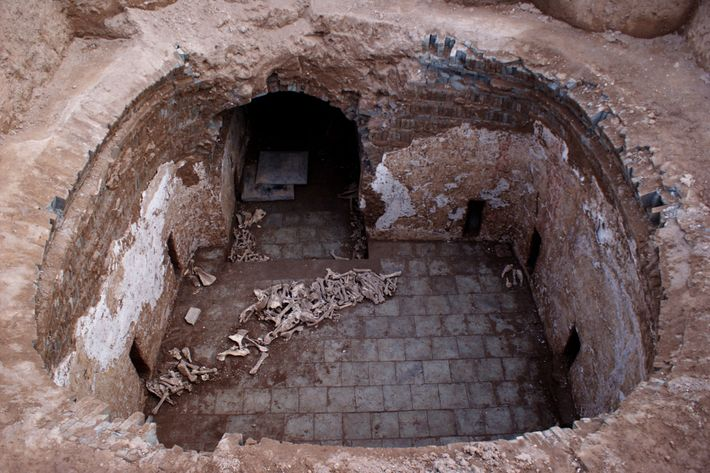 Une pile d'ossements contenant les restes d'ânes a été découverte par les archéologues dans la sépulture ...