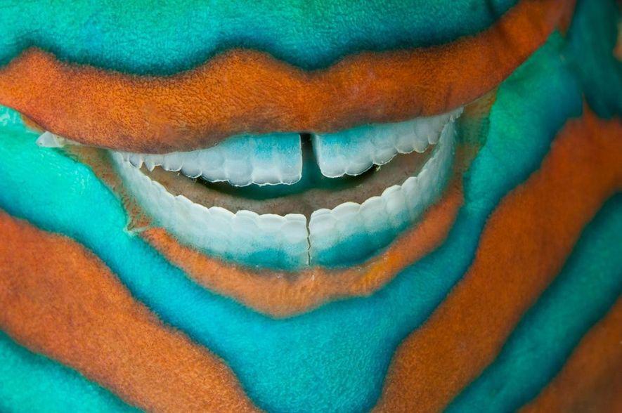 J'étais dans les eaux de l'île Heron, en train de photographier la grande barrière de corail, ...