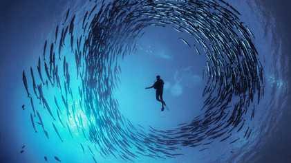 David Doubilet, le photographe qui capture les océans