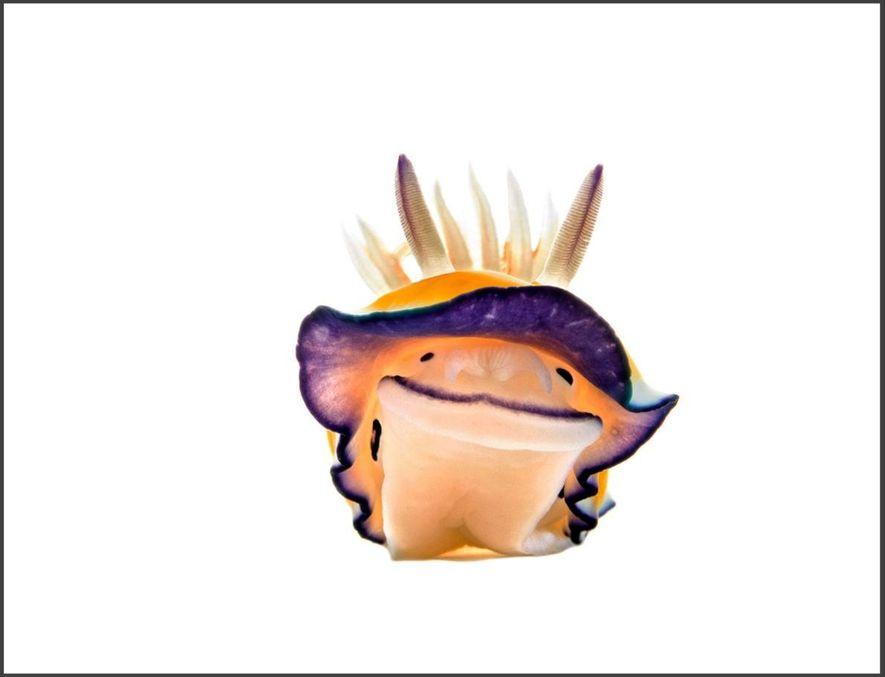 Ce doris d'Anne (Chromodoris annae) semble sourire à la caméra depuis son petit studio sous-marin, que ...