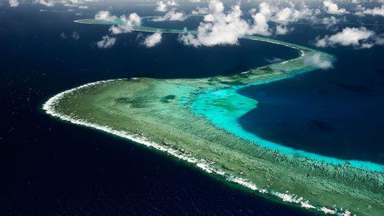 Plongez dans les océans avec David Doubilet