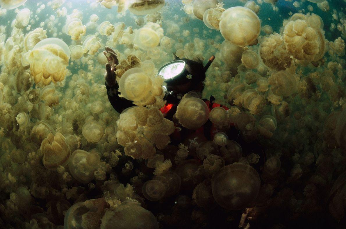 Dans le Lac aux Méduses, le Dr. William Hamner est encerclé par un groupe de méduses ...