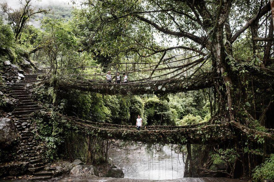 À Cheerapunji, l'une des attractions principales de Meghalaya est un pont racine à deux niveaux. Le ...