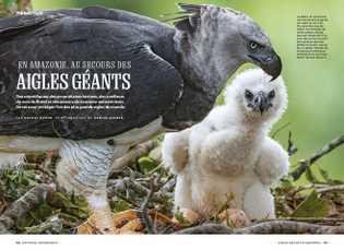 En Amazonie, au secours des aigles géants.