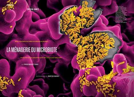 La ménagerie du microbiote
