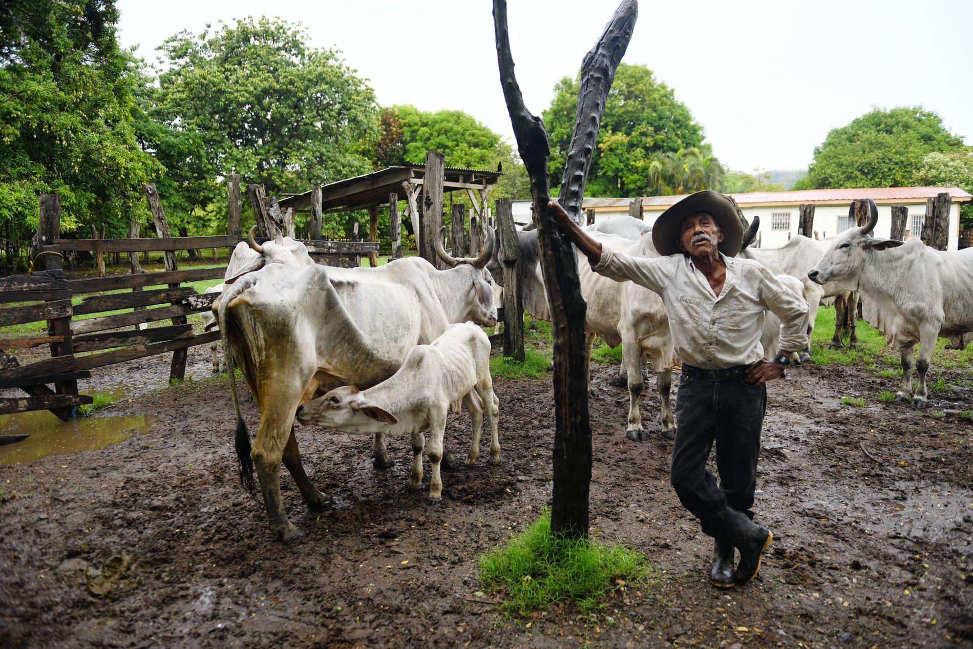 À bientôt 90 ans, Ramiro n'a pas de secret mais un rituel immuable : chaque jour, ...
