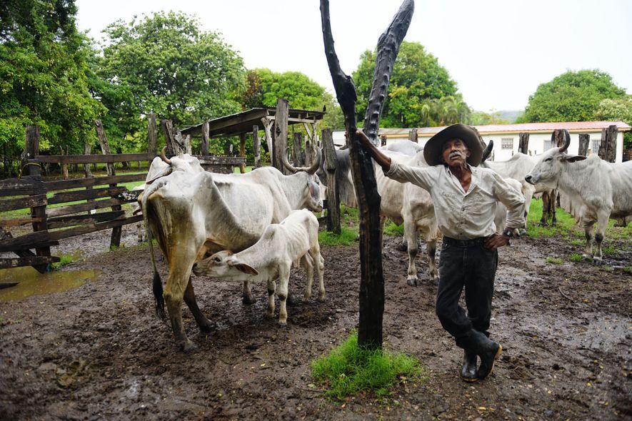Costa Rica : quel est le secret des centenaires du Guanacaste ?