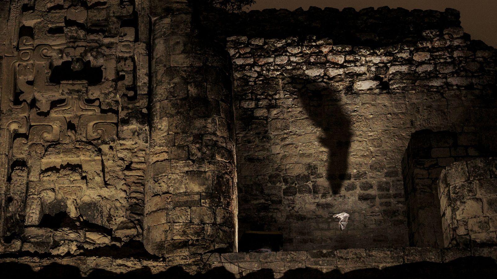 Un chrotoptère oreillard revient avec le dîner dans son abri, sur le site archéologique d'Hormiguero. Les ...