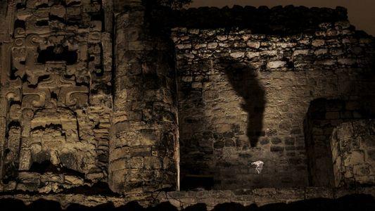 Des ruines mayas sont devenues le refuge d'espèces rares de chauves-souris carnivores