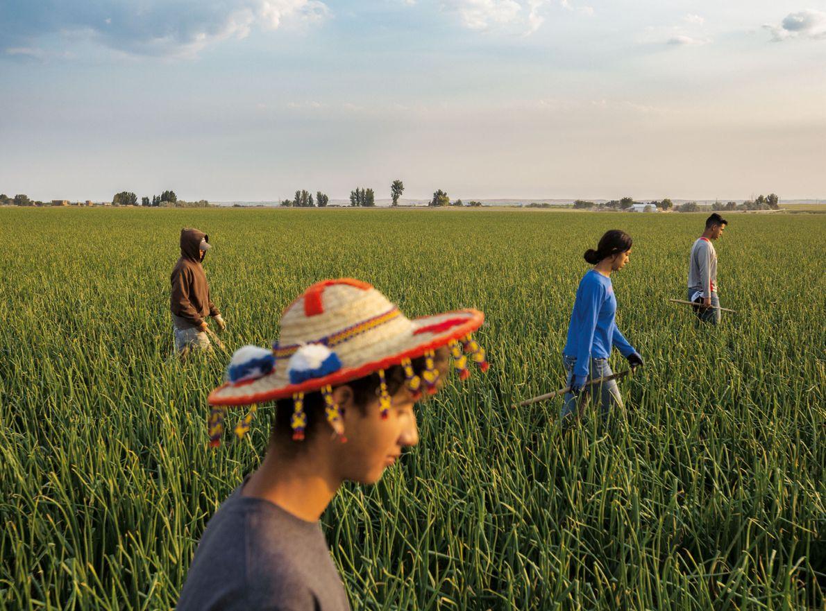 Coiffé d'un chapeau rapporté par son père de l'État mexicain de Nayarit, Elvis Navarrete désherbe un ...