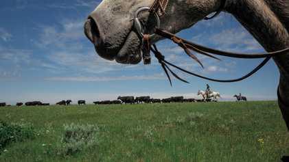 Un projet controversé de réintroduction d'espèces menacées secoue le Montana