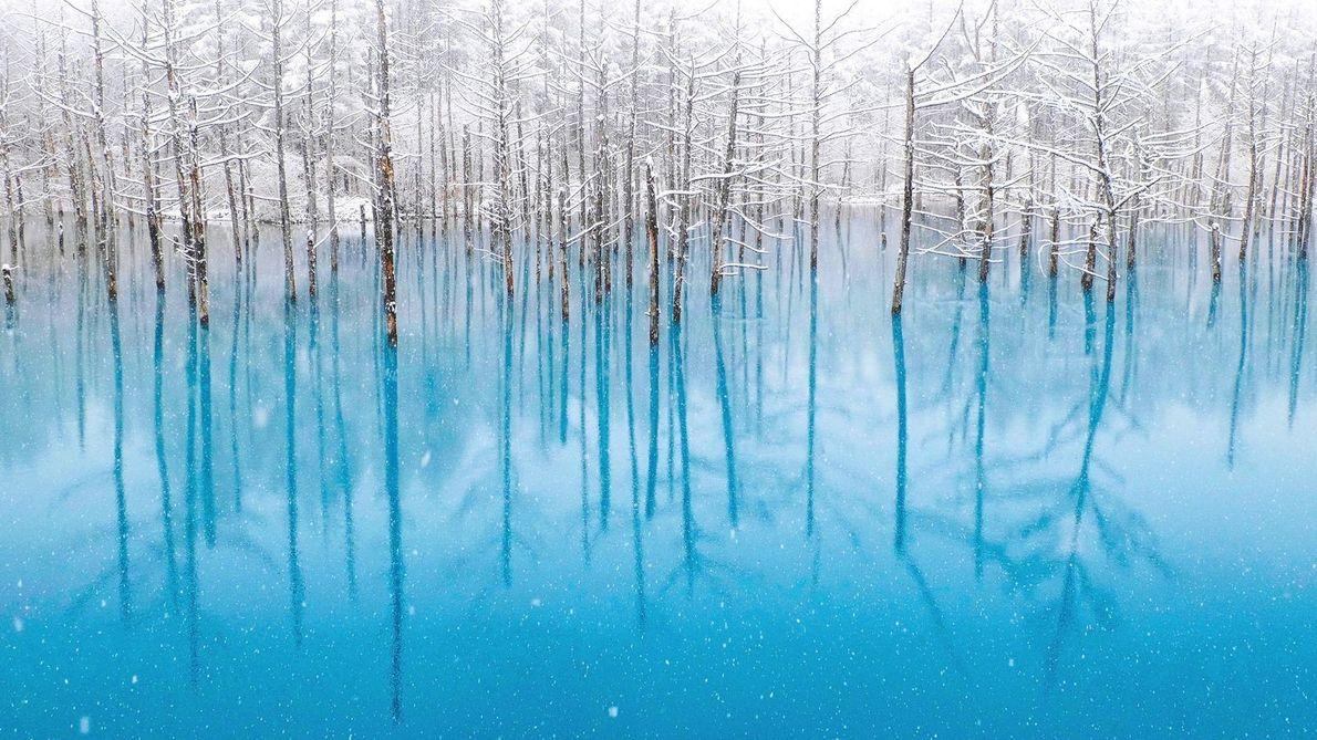 Le Blue Pond (l'étang bleu) au début de l'hiver dans le district Biei à Hokkaidō au ...