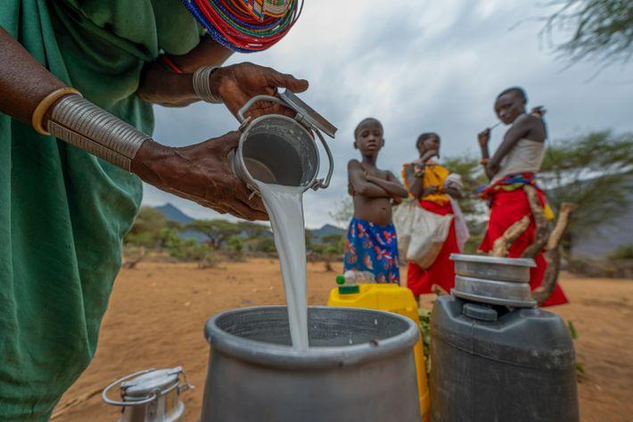 Une femme samburu verse du lait de chèvre dans un bidon que les équipes de Reteti ...