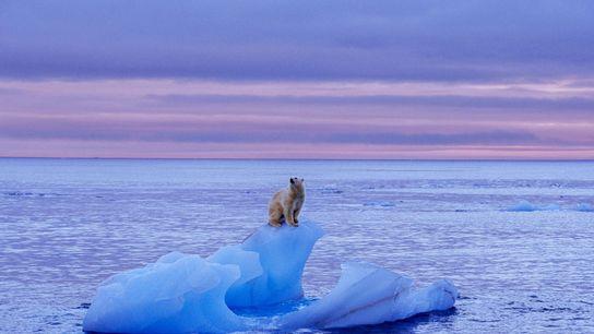 Un ours polaire se tient sur un iceberg près de l'île de Svalbard, un archipel norvégien ...