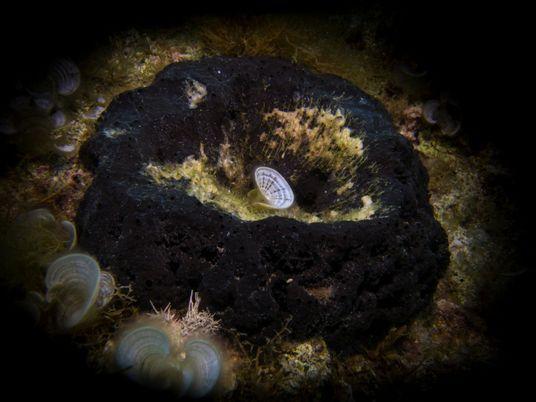Découverte de fossiles d'éponges vieux de 890 millions d'années