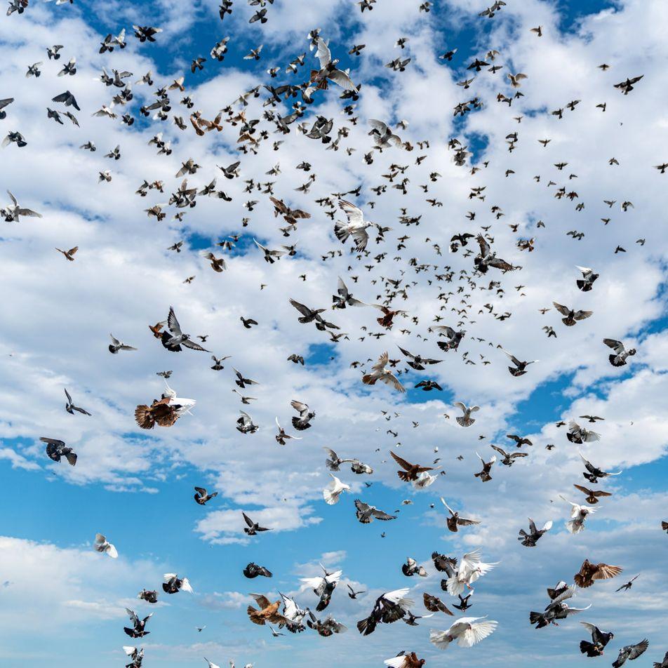Combien y a-t-il d'oiseaux dans le monde ?