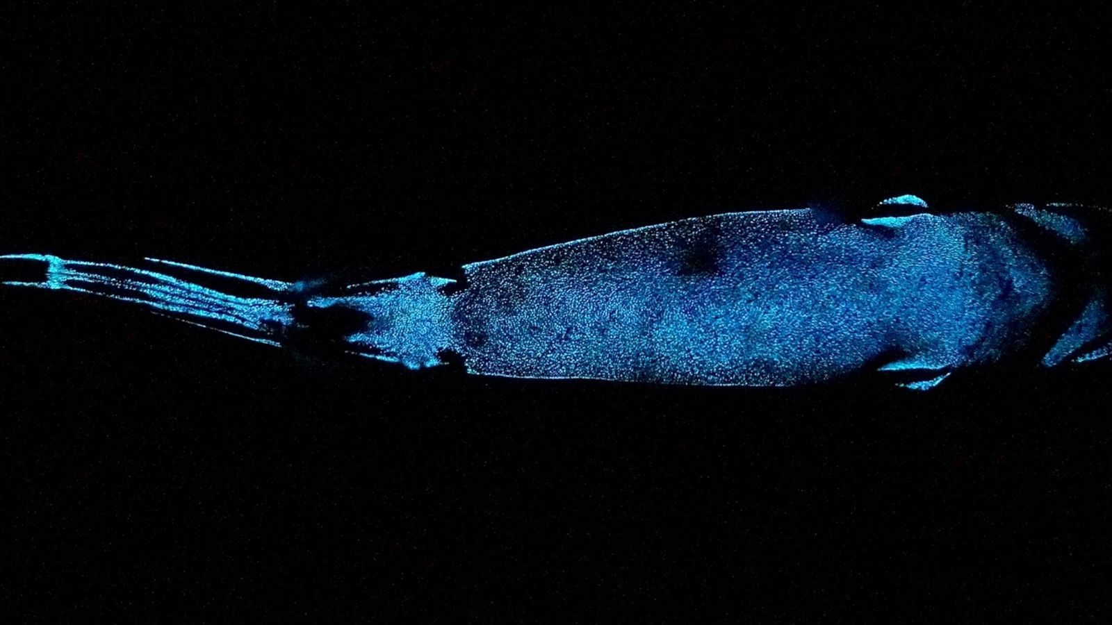 glowing-shark-01