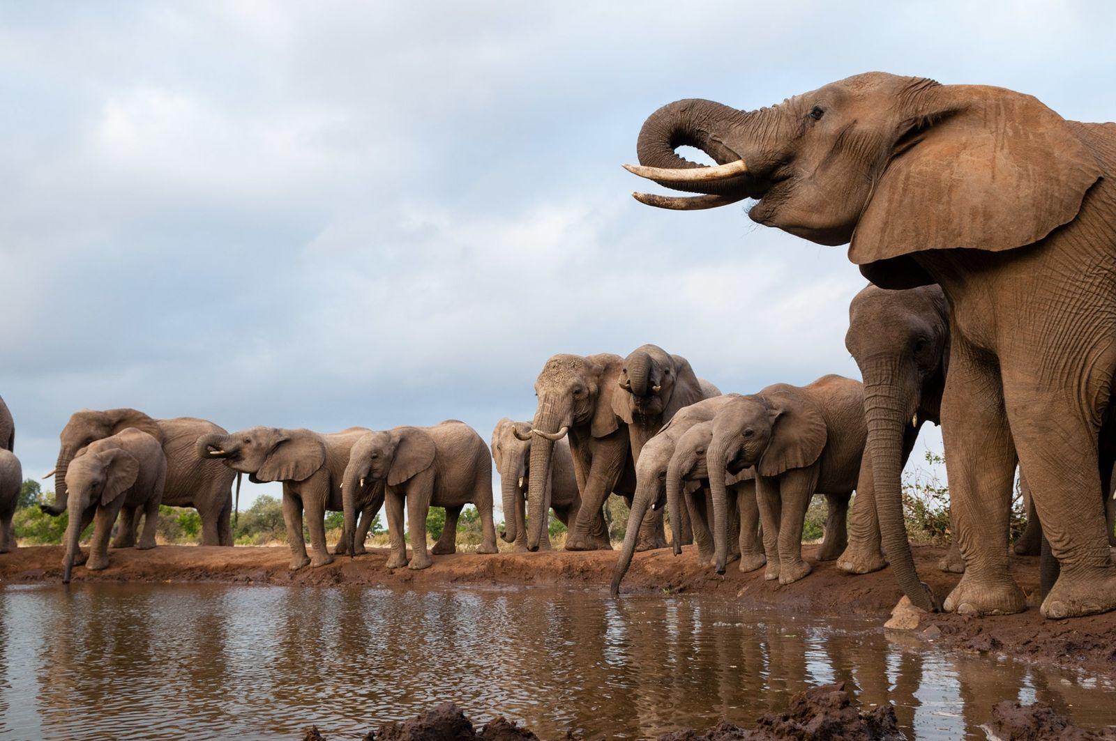 Un mystérieux mal tue les éléphants du Botswana par centaines