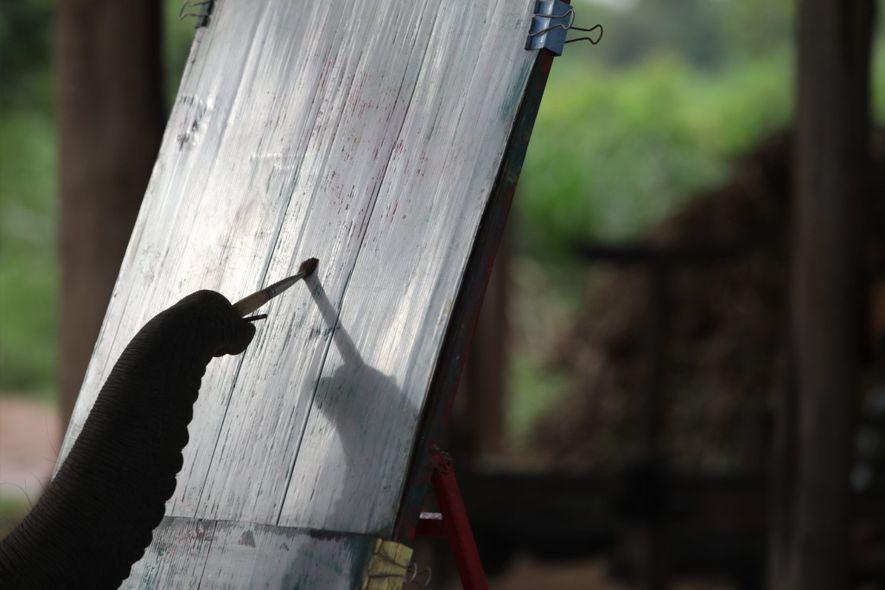 Un éléphant s'entraîne à peindre à Ban Ta Klang. La peinture est l'un des numéros les ...