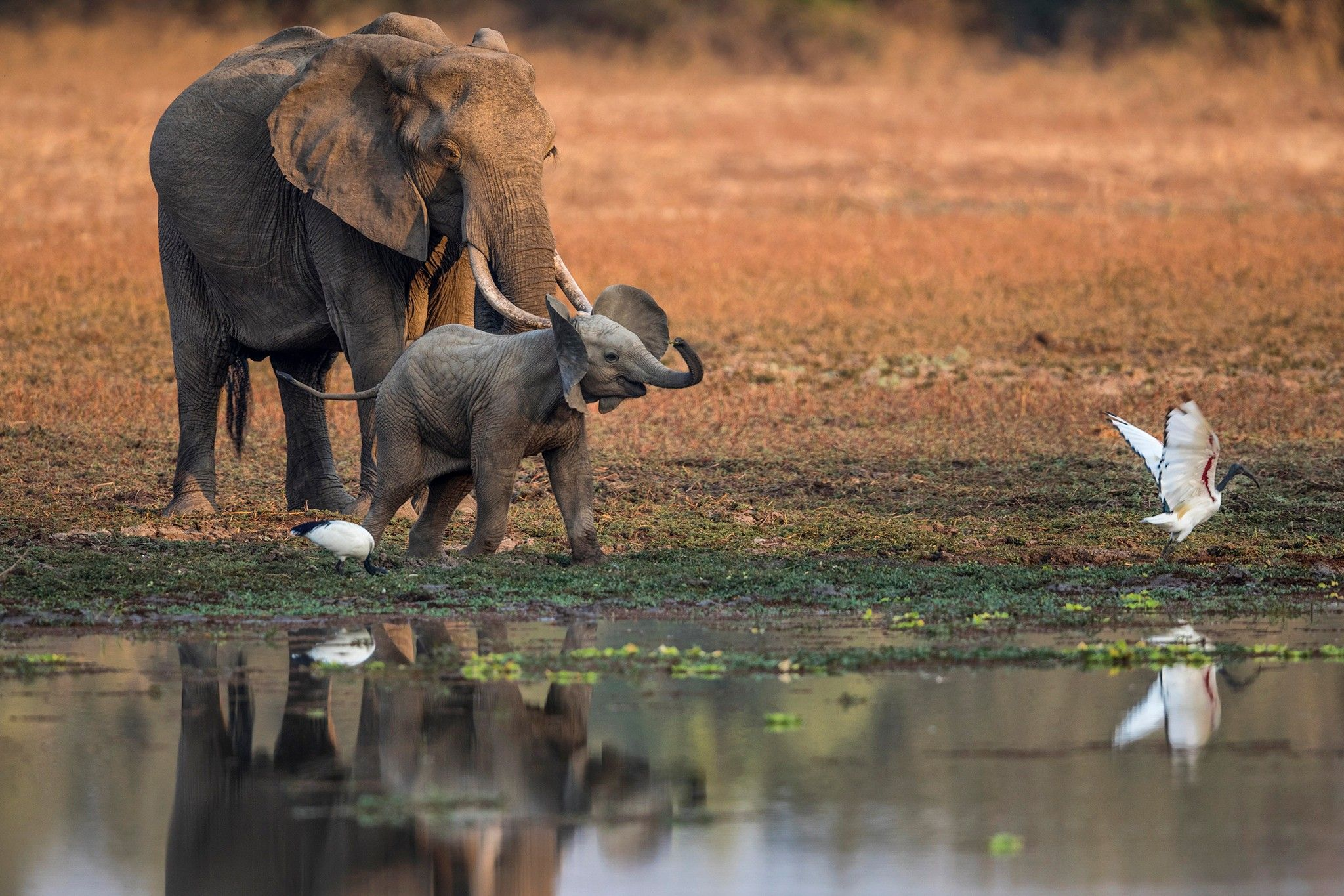 Pour explorer le monde sauvage, le safari pédestre reste la meilleure option | National Geographic