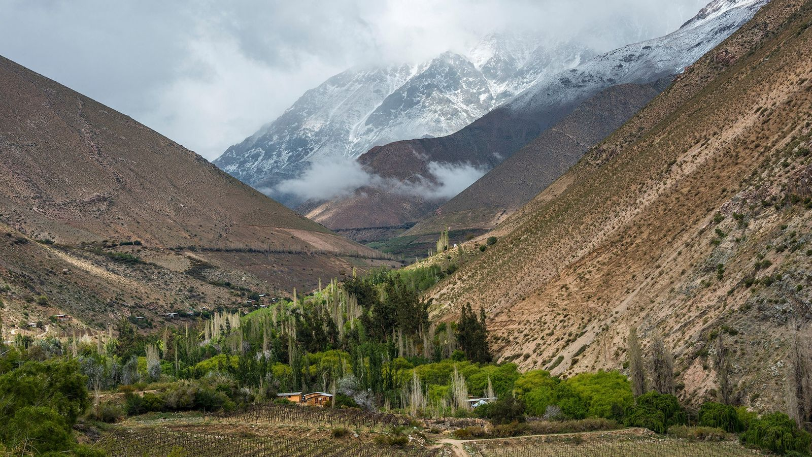 À quelques heures de Santiago, la vallée d'Elqui, au Chili, est réputée pour sa production de ...
