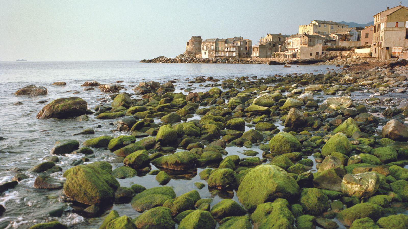 À Erbalunga, authentique village de pêcheurs du cap Corse, la vie s'écoule au rythme d'un adagio.